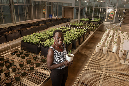 Esther Ngumbi in greenhouse