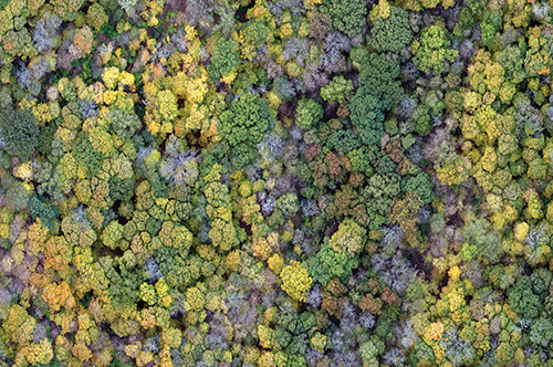 Drone image of Trelease Woods