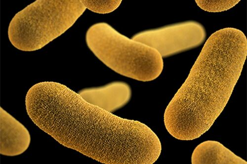 Slowing bacteria may be more effective than killing them