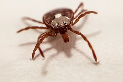Should we worry about ticks this summer?